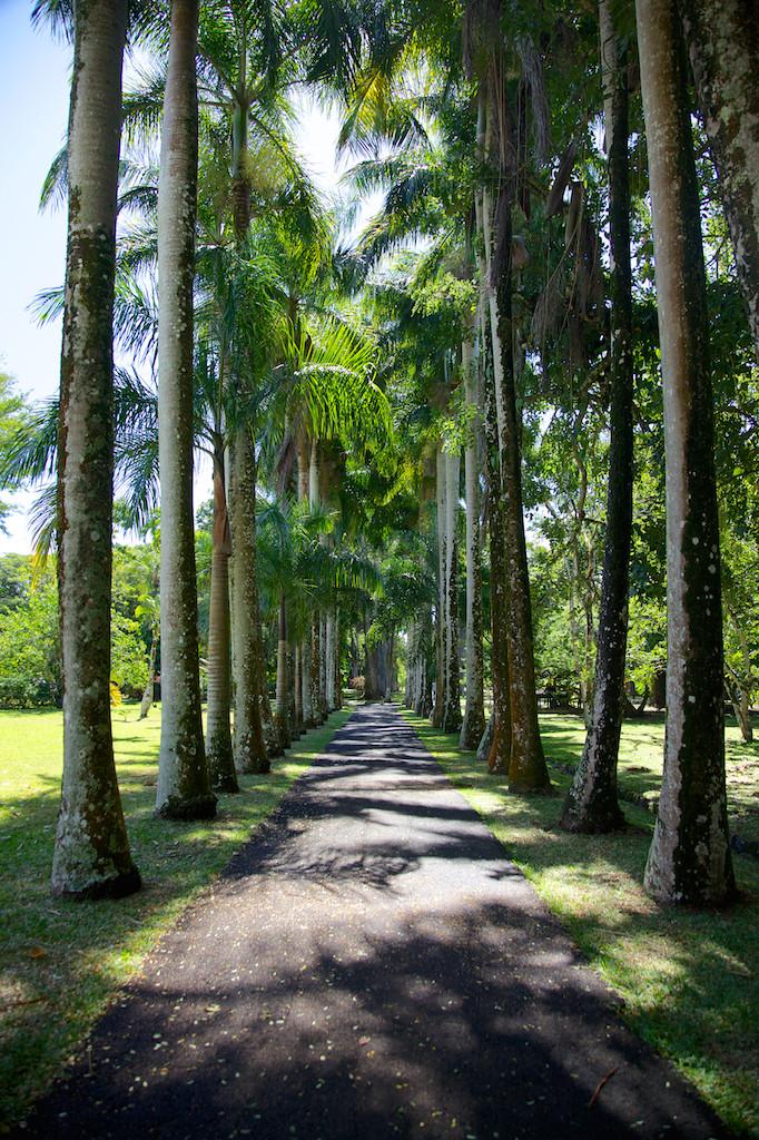 Sir Seewoosagur Ramgoolam Botanical Garden, Pamplemousses