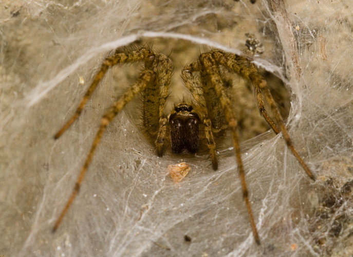 Spider (2009)