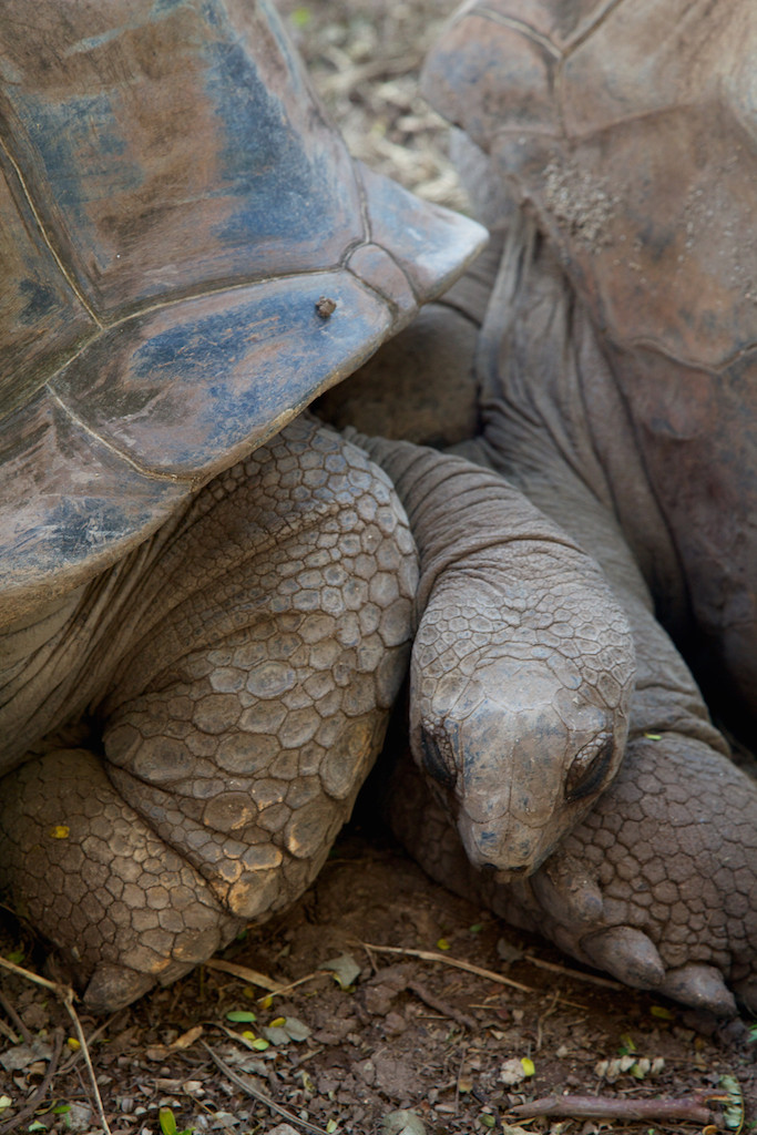 giant turtles, Seven-coloured Earth, Chamarel