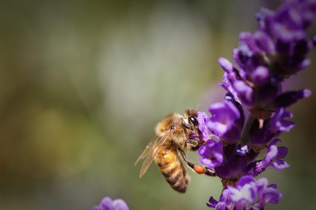 Honey Bee (2018)
