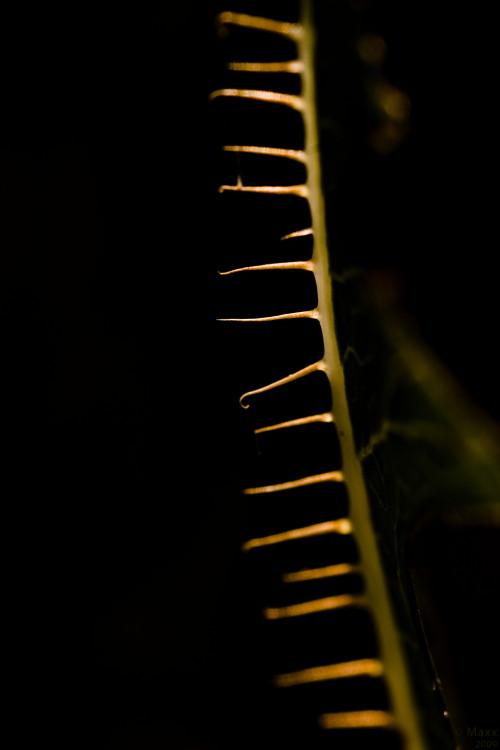 Comb (2009)