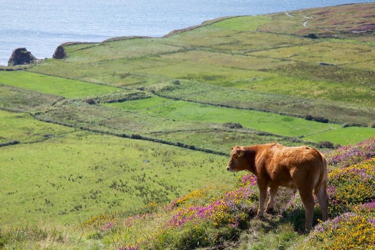 Sky Road, west of Clifden, Connemara