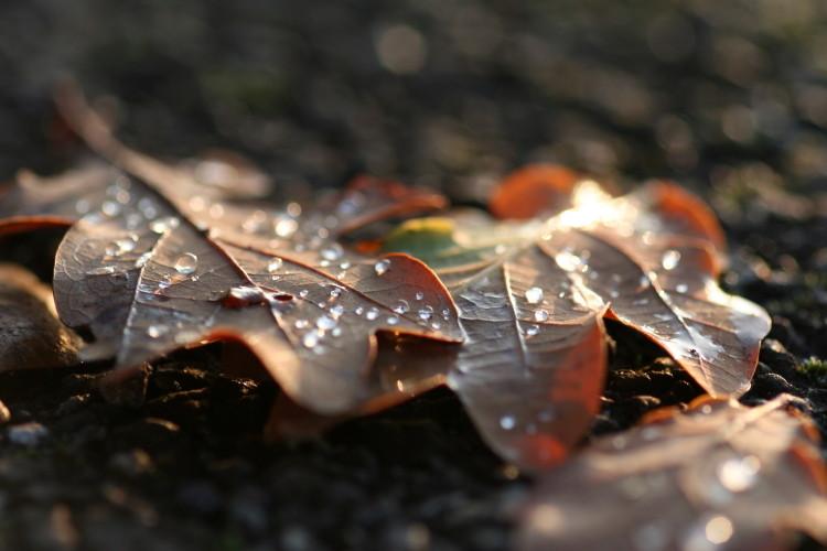 Autumn Leaves (2008)
