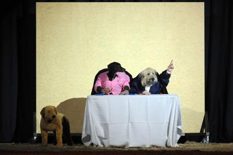 Witzige Präsentation auf der Doglive Gala .... es muss ja nicht immer Dogdance sein, gell ?