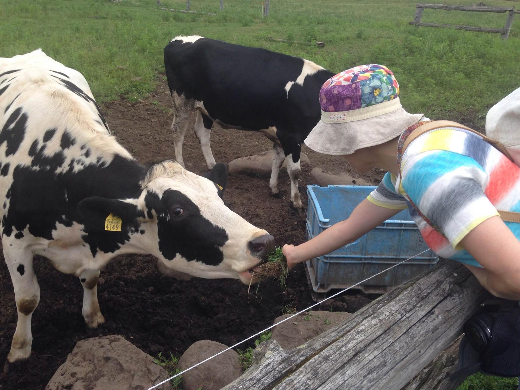 広い牧場へ出れば、動物にごはんをあげたり