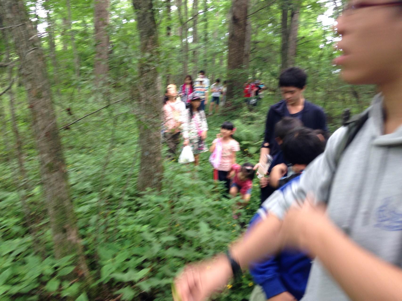 美術館を出て「遠足」へ。森の中をずんずんずんずん