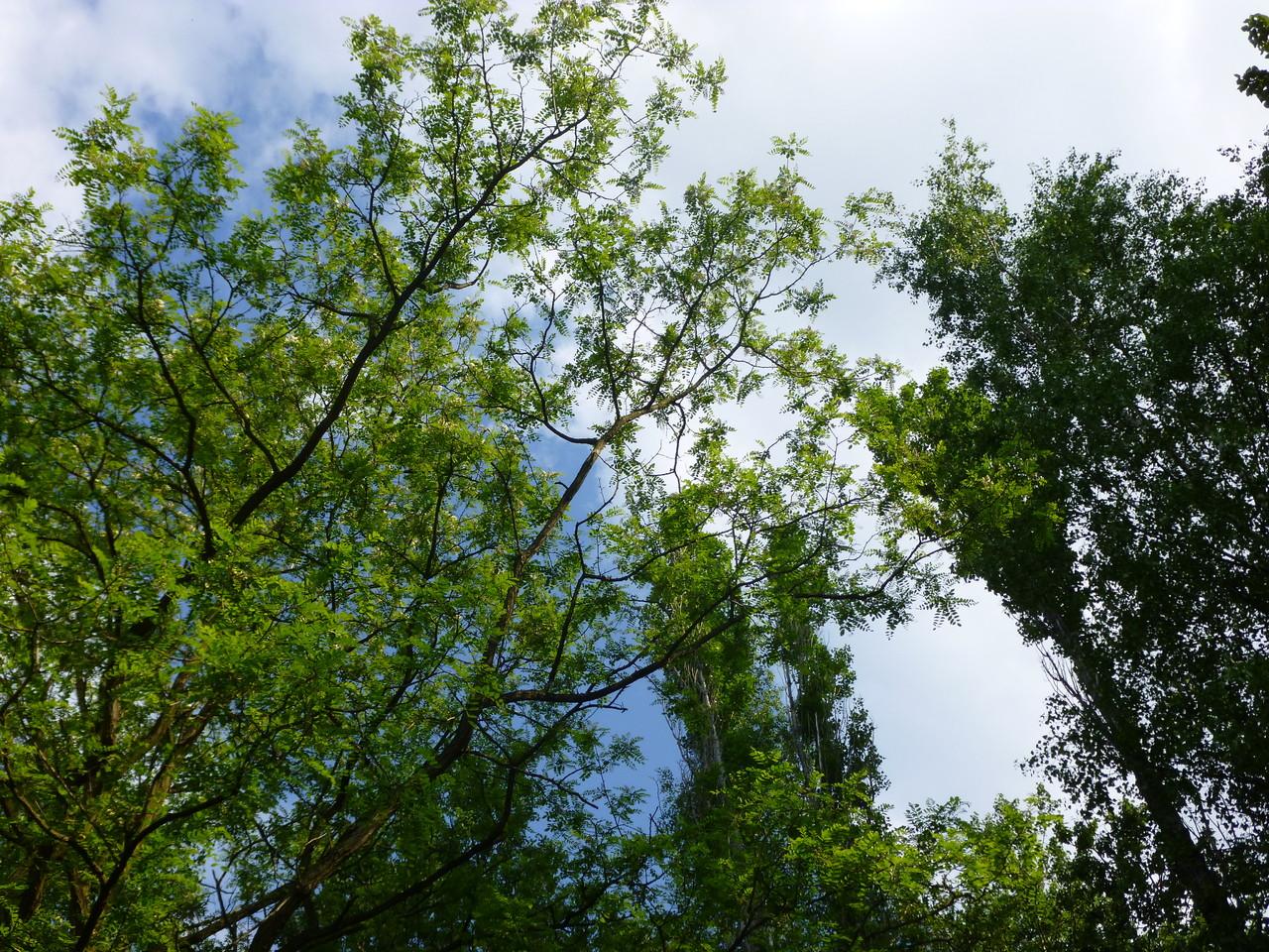 Blick zu den Wipfeln der Bäume