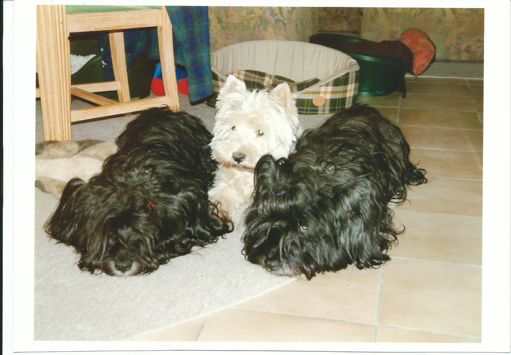 Westie & Skye Terrier
