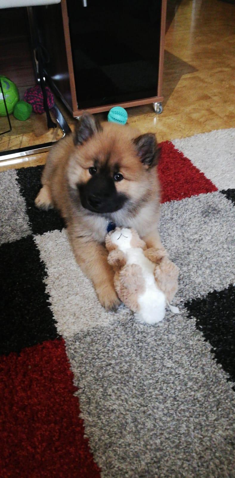 Cosmo in seinem neuen zu Hause 😍