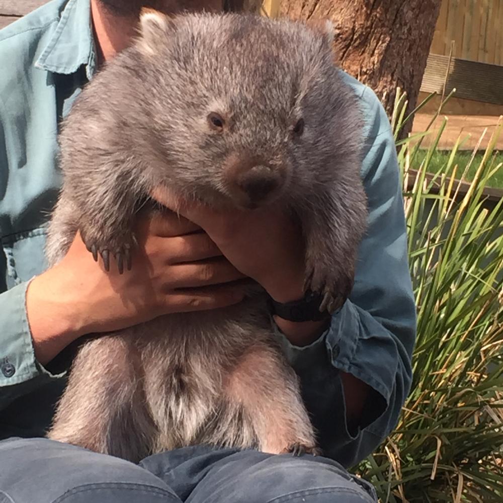 """Wombat """"Mareya"""""""