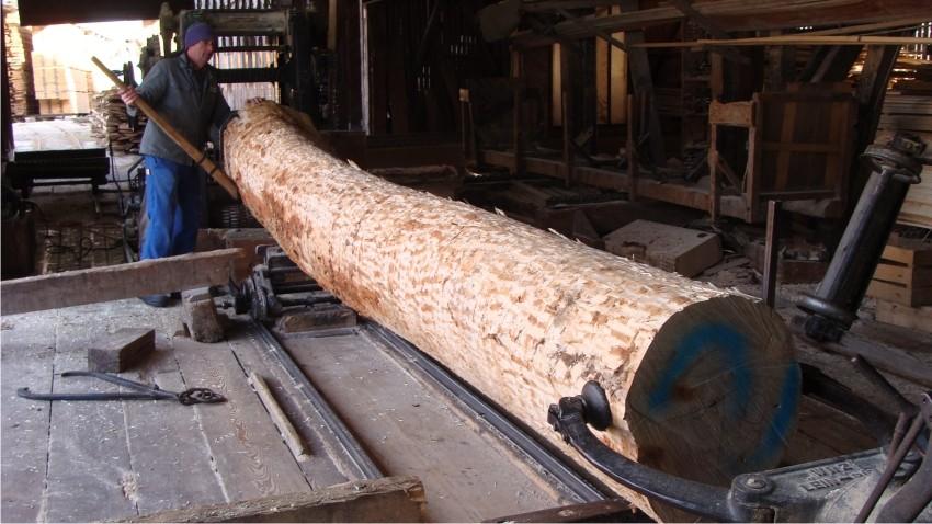 Baumstamm auf Vollgattersäge aufsägen