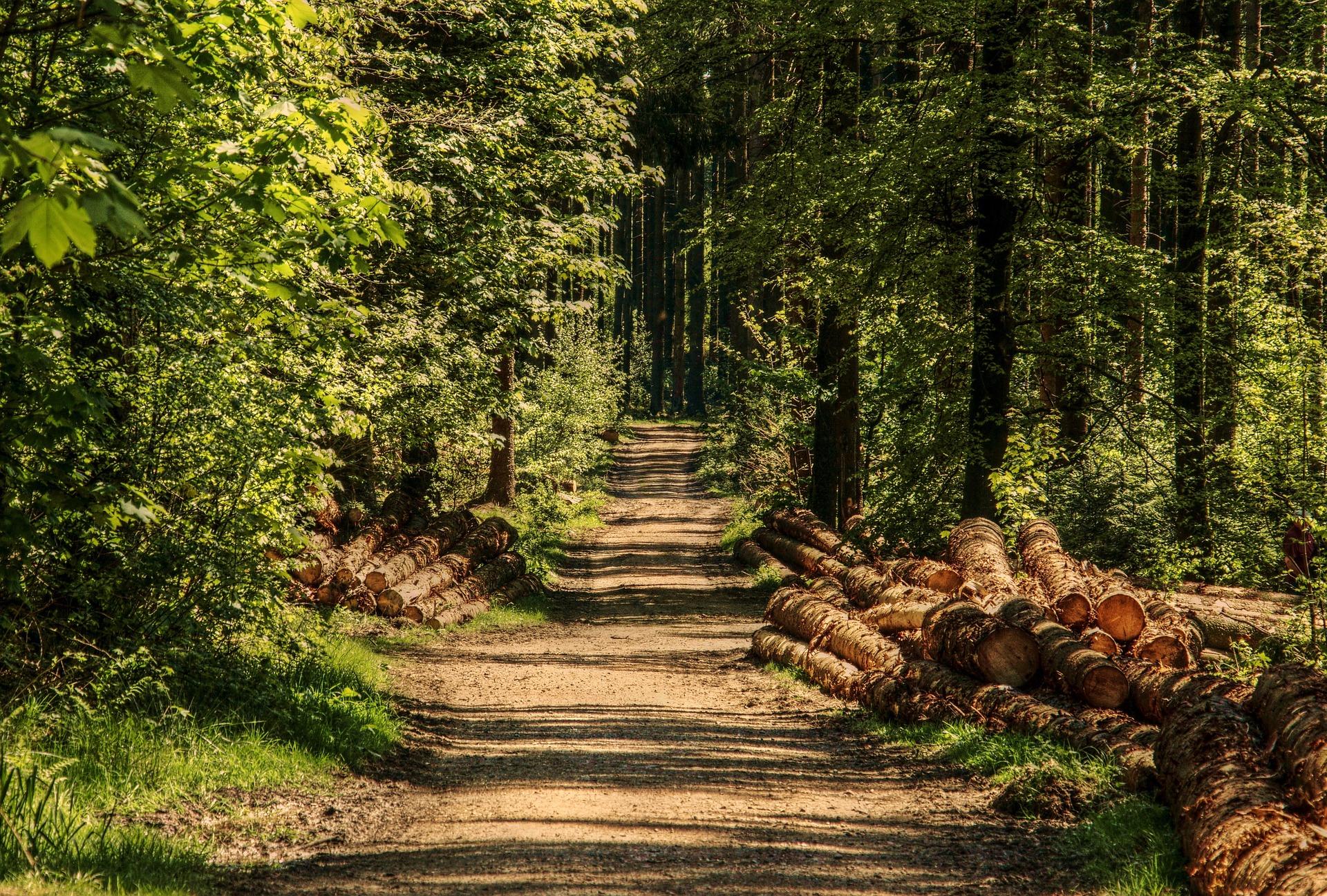Waldmontag - Spannende Beiträge zu Wald im Klimawandel