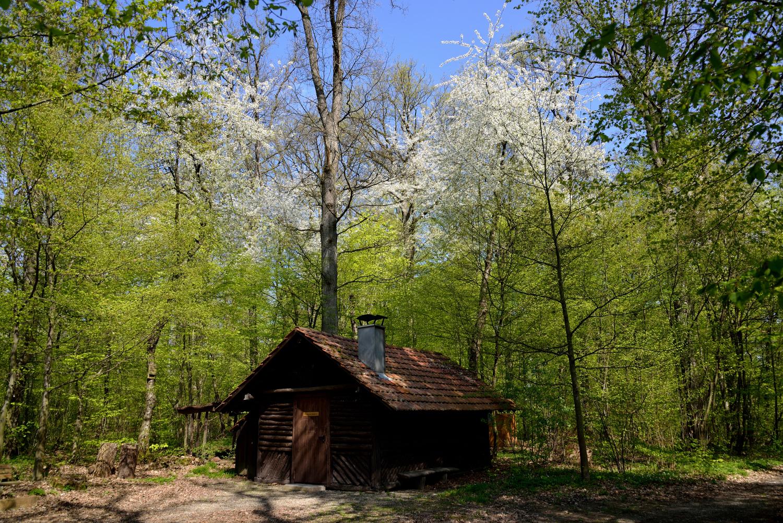 Die Vereinshütte auf dem Spitzenberg