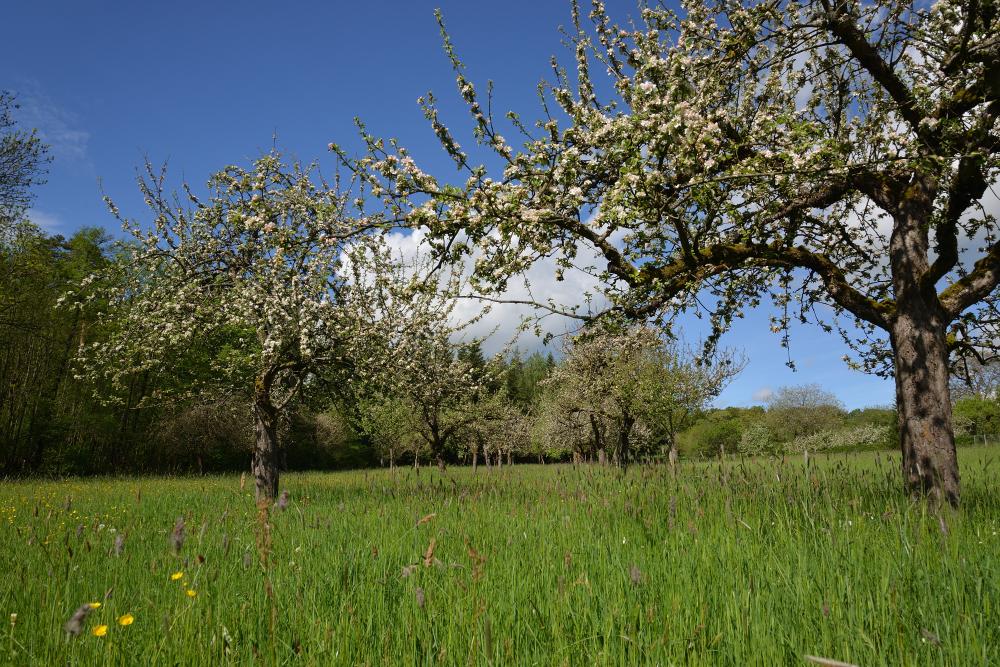 Frühling an der Stellenklinge