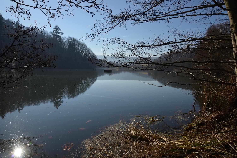 "Das Naturschutzgebiet ""Michelbachsee"""