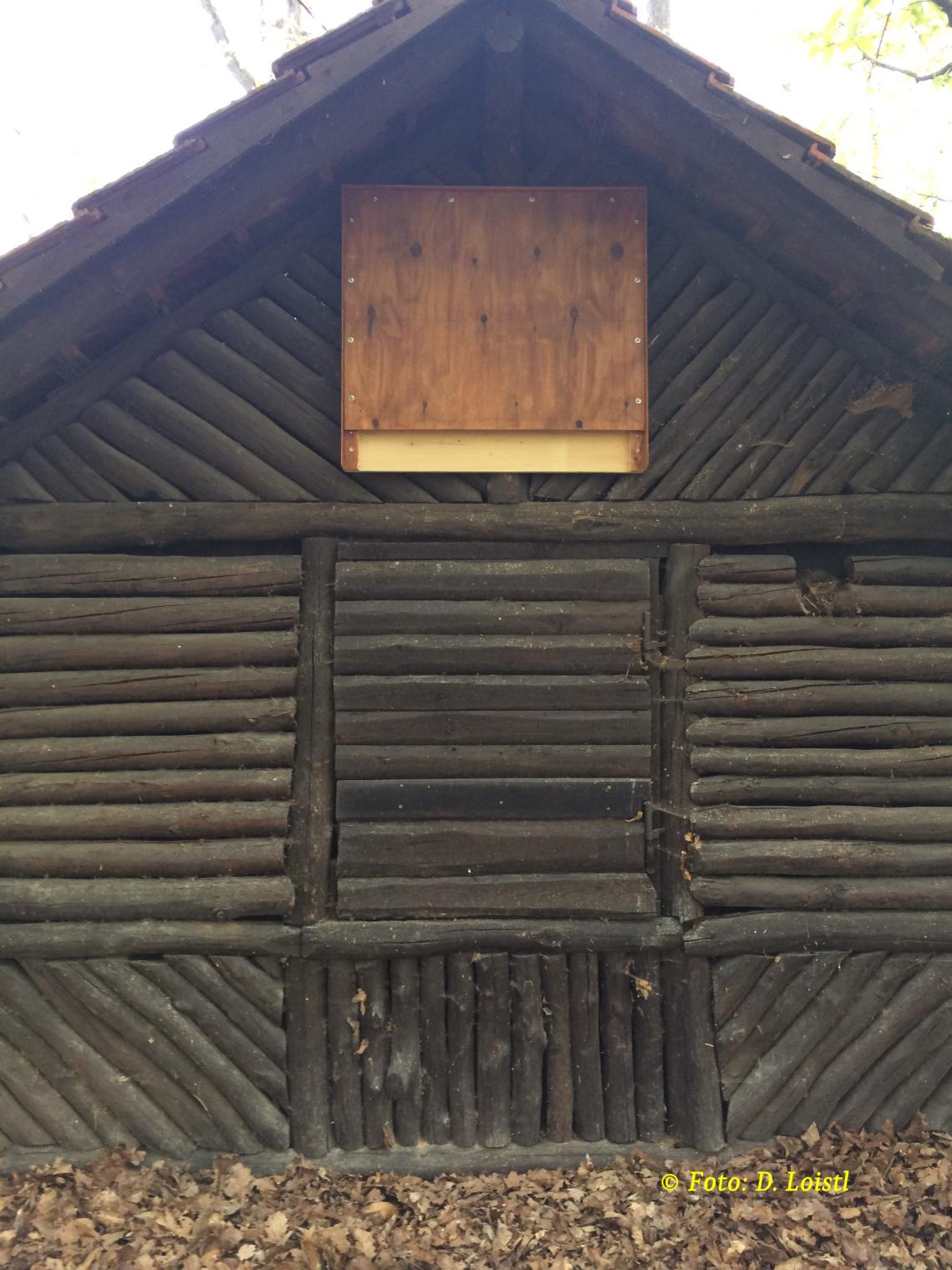 Fledermausunterkunft an der Rückseite der Hütte