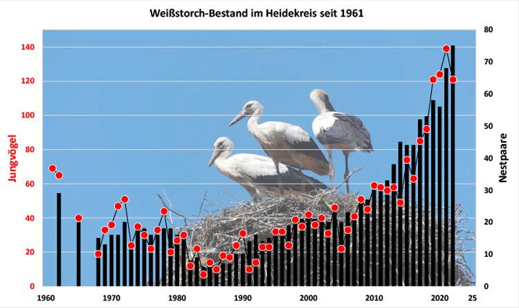 Weißstorch: Nestpaare und Jungenzahl (1962-2014) im Heidekreis inklusive Vogelpark    [NPa (blau), JZG (rot)]