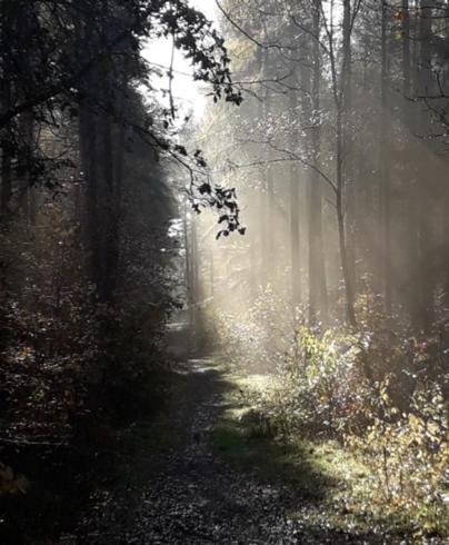 Innerörtlicher Wald in Munster (Foto: Stefan Koszowyj)