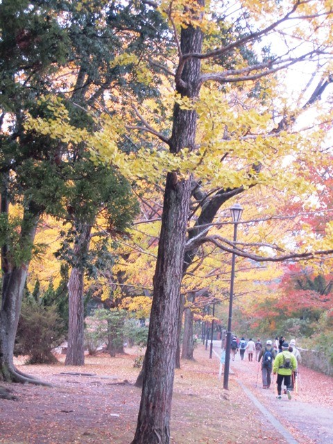 鮮やかな紅葉に囲まれ西公園出発
