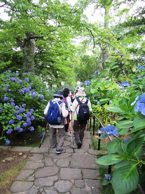 紫陽花に囲まれて歩け 情緒ある時間を楽しめました