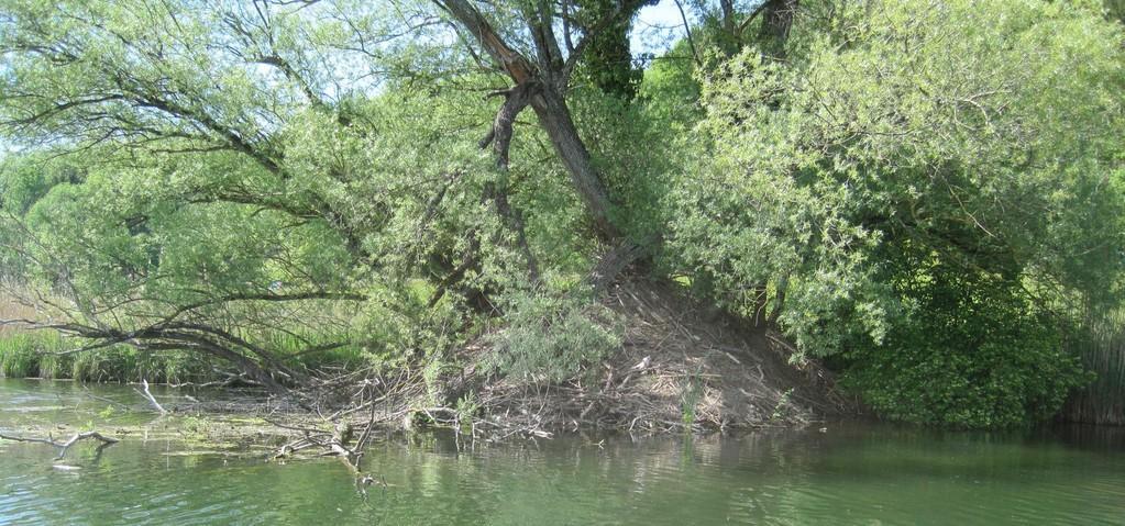 Die Zugänge zum Bau befinden sich unter Wasser und sind nicht sichtbar