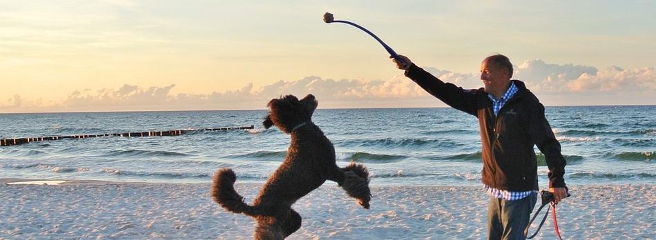 Dog fun zomer challenge spelen wandelen