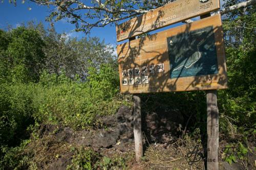 Hier führt der schmale Pfad den Hügel hinunter zum Playa Baquerizo
