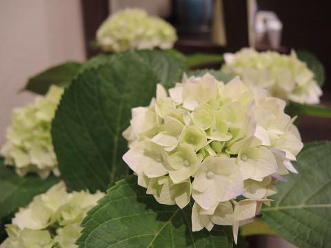 北九州市小倉南区にあるリラクゼーションマッサージブログ