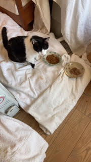 ペット介護 20歳猫ノアちゃんがてんかん発作後の見守りシッター