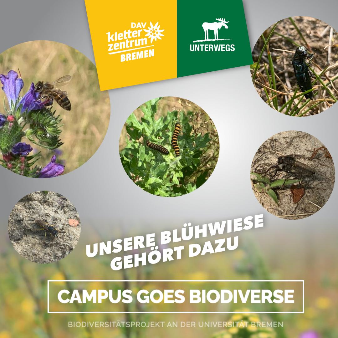 Campus Goes Biodiverse
