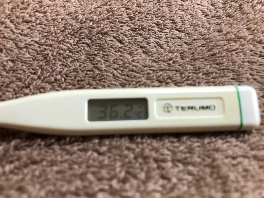 今朝の検温