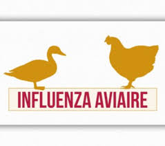 ABATTAGE PREVENTIF - Influenza aviaire