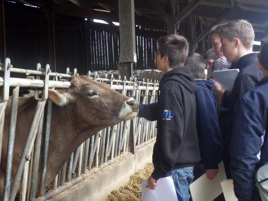 Découverte de l'élevage Tourangeau - 4ème