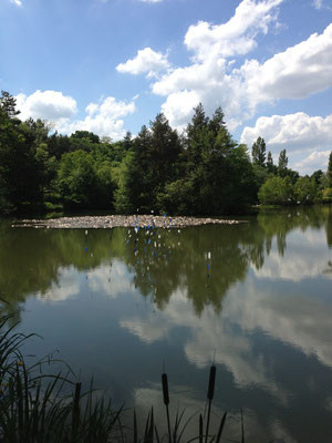Visite de l'Arboretum de la Martinière - 1e BAC AP