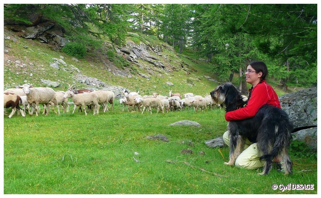 Devant les moutons de la vallée de la Clarée, en juillet 2010.