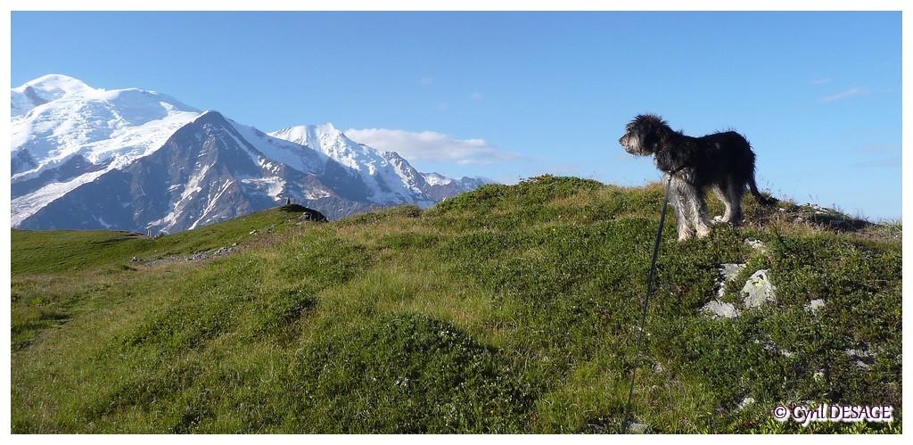 A l'Aiguillette des Houches en juillet 2011.