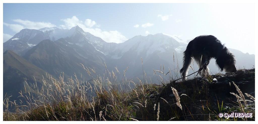 Sur les hauteurs de St Gervais, face au Mt Blanc, Bionnassay, Miage (octobre 2010).