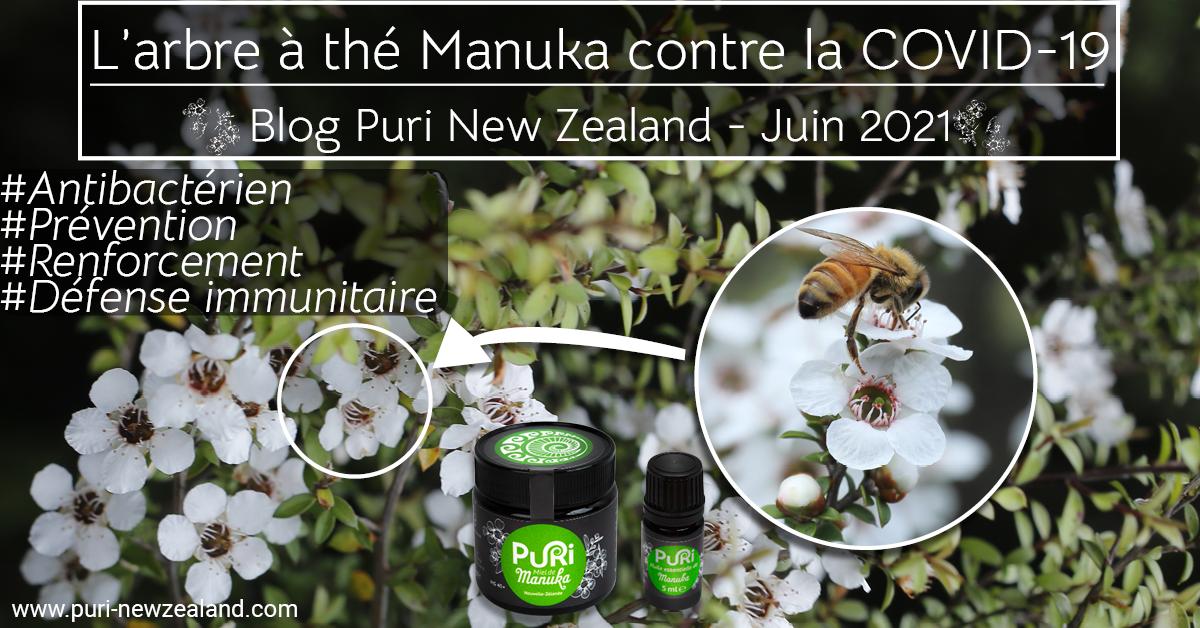 L'arbre à thé Manuka contre la COVID-19