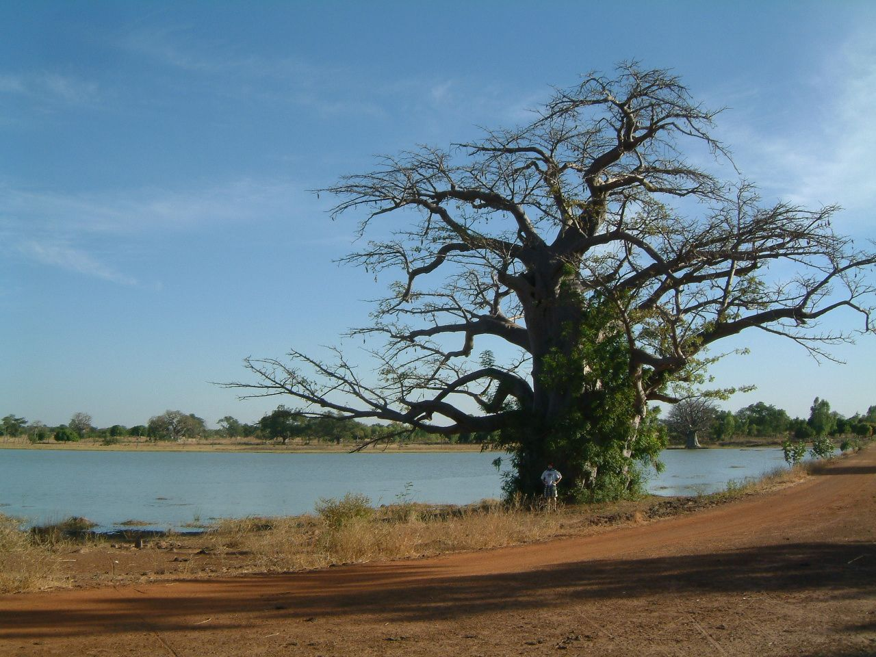 Corentin et le baobab