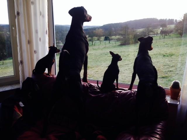 Hundefernseher