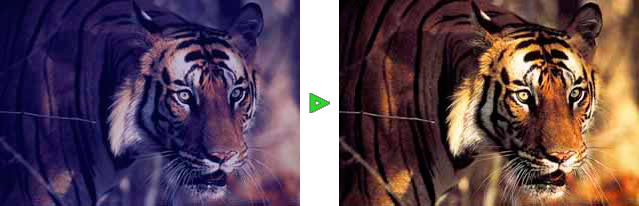 APS Filme digitalisieren mit Nachbearbeitung