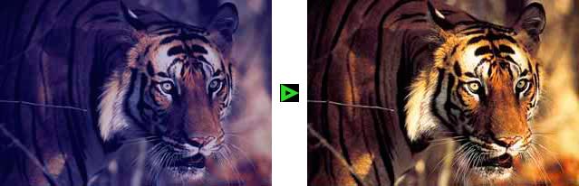 Fotos digitalisieren mit Nachbearbeitung