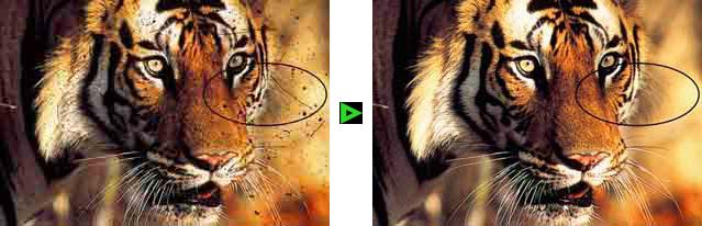 Fotos digitalisieren lassen mit Kratzerkorrektur ICE