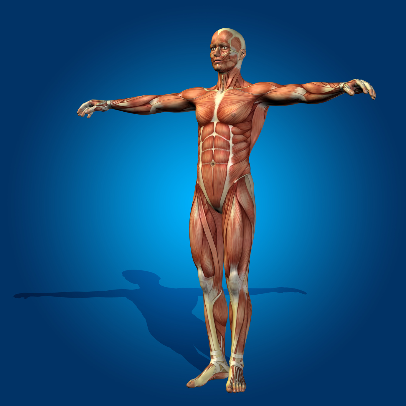 Fascia Body 7