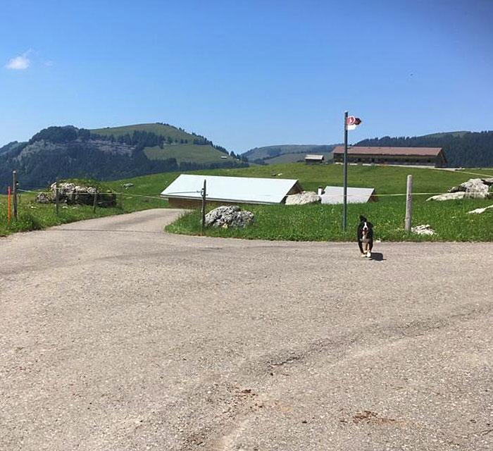 Peggy empfängt die Besucherinnen und Besucher bei der Abzweigung. Die Säntisalp Bächli ist bereits zu sehen (1. Haus links).