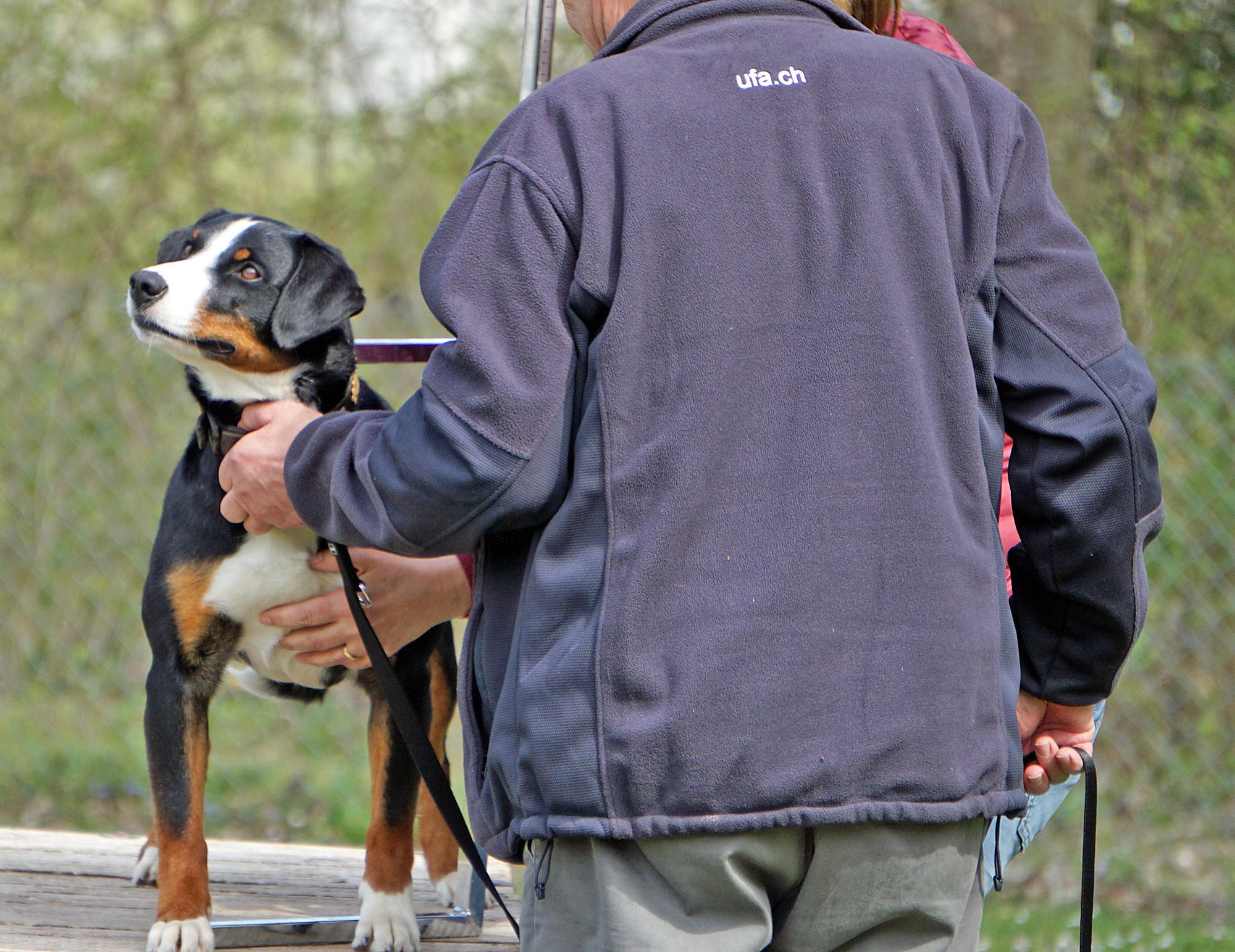 Mit dem Körmass wird der Hund vermessen.