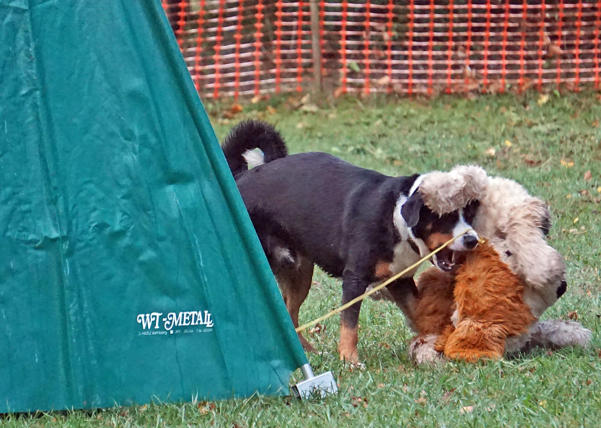 Plötzlich taucht ein riesiger Stoffhund auf.