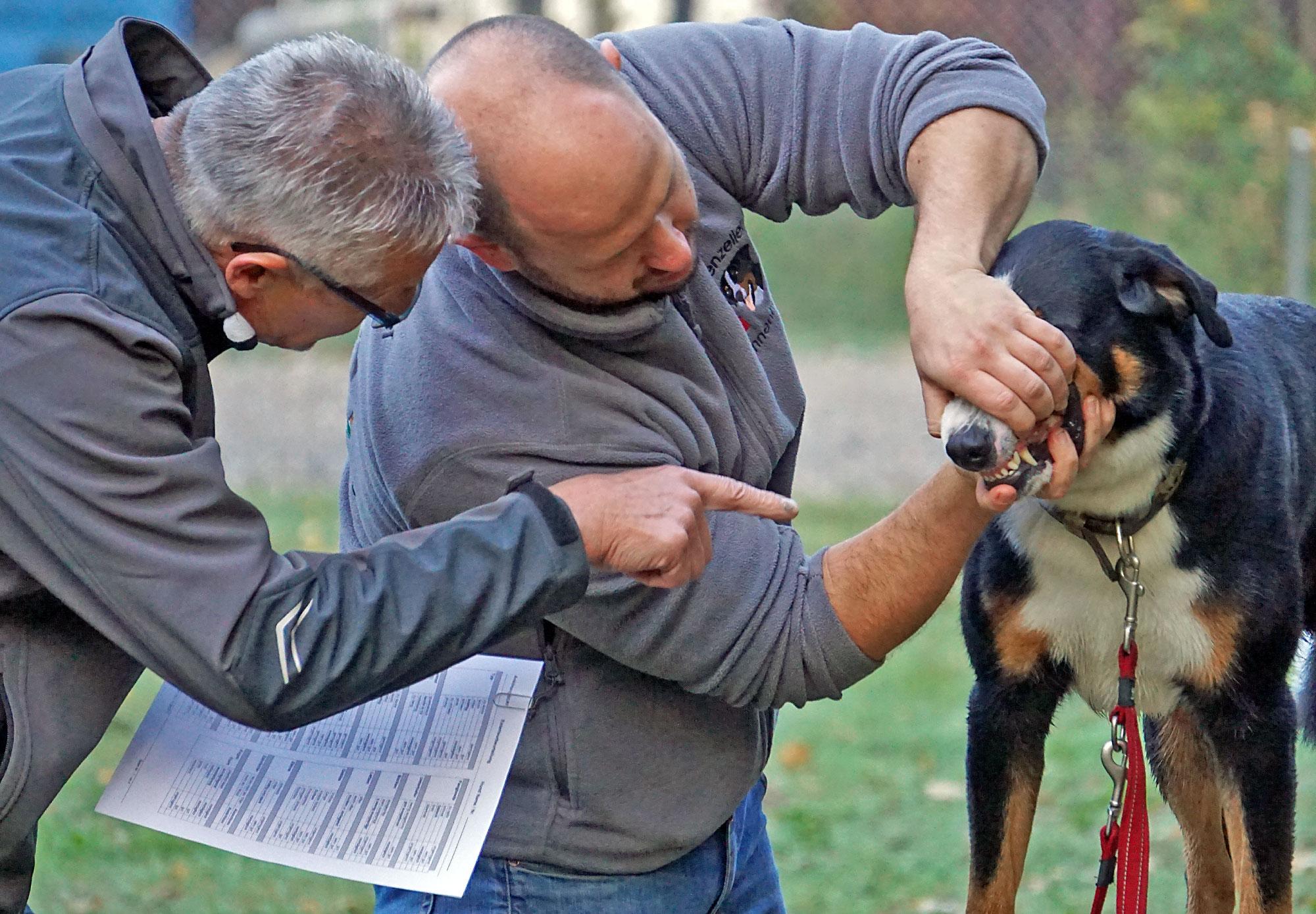 Auch die Zähne werden kontrolliert. Dabei sollte sich der Hund ins Maul schauen lassen.