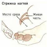 как стричь когти собаке кошке