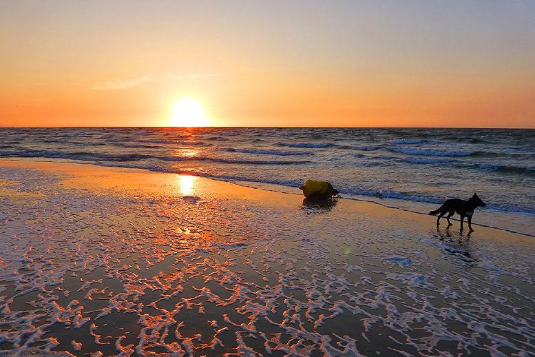 Hundeurlaub / Nordseeferien mit bis zu vier Hunden in unseren Komfort-Ferienhäusern an der Nordsee